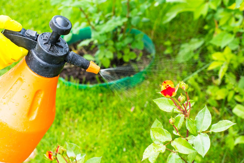 Our Green Pest Control Programs